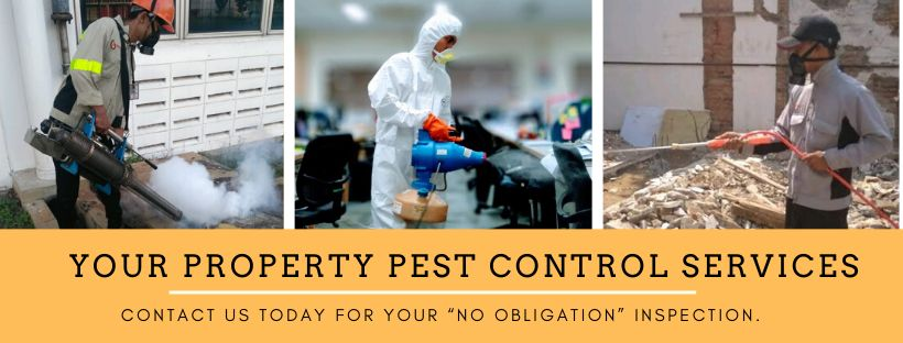 your home pest service